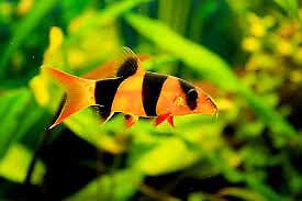 Biorb and fish