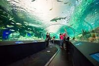 Group rate tickets to ripleys aquarium!