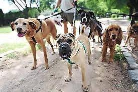 Walking dogs service