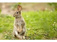 Rabbiting / vermin control