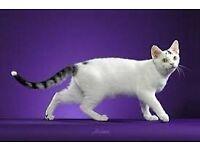 Plz plz help me find my cat