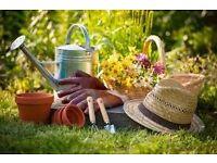Friendly and Reliable Gardener, & Garden Maintenance, Barnet, Enfield & Local areas
