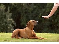Dog Training Classes at Hampstead Norreys Village Hall, Puppy training, obedience and Rally classes