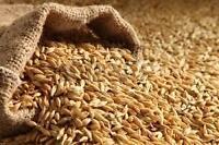Avoine nouvelle récolte/Oats new crop