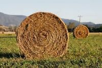 Looking for round bale hay of decent quality