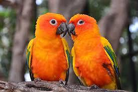 Birds wanted breeding pairs please read