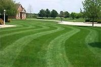 Tyler's Lawn Care & Property Maintenance