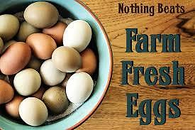 FARM FRESH BROWN EGGS Windsor Region Ontario image 1
