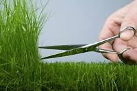 Grass Cutting $30/cut & Snow Removal $30 and UP