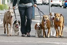 Dog walker available in Hilperton. ONLY £5!!!!!! Very experienced and reliable. Dog sitting training