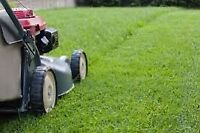 Looking for Lawn mowing for fall