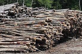 "16"" firewood , delivered split cut last fall!!"