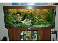 JUWEL VISION 450 5FT IN MAHOGANY FISH TANK FULL SETUP WITH CABINET
