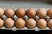 Fresh brown egg for sale