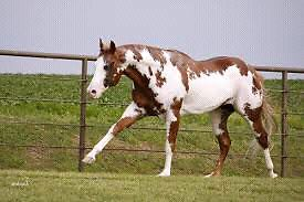 Wanted beginner horse for trails Maryborough Central Goldfields Preview