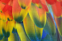 GENUINE Exotic Bird Feathers