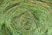 Quality horse hay, no rain
