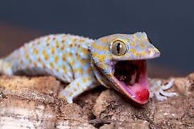 Will take unwanted Reptiles/ Amphibians