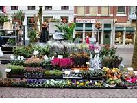 HELP WANTED ON LONDON MARKET PLANT STALL WANTED , DELIVERY AND SET UP, BUYING AND ALL ROUND HELP