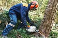 TREE CUTTING AND REMOVERAL SERVICES (painting, landscaping etc)