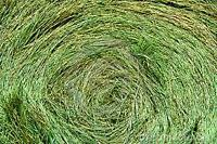Round bales 900 lbs, quallity horse hay
