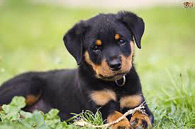 Looking for a pup