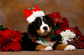 Christmas grooming appointments available