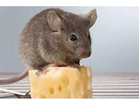Mouse removal (FREE Consultation) (Ethical Option available) - Shoreham, Worthing, Brighton and Hove