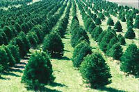 !!! CHEAP AND BEAUTIFUL TREES !!! ORDER NOW FOR SPRING!!!!!