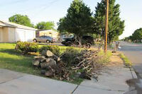 Tree , Brush & Junk Removal Services