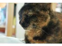 Walthamstow- Black/Brown Tortoiseshell Female cat missing