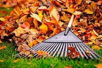 Leaves / Yard - Leaf Clean-up / Gutters - Power Wash