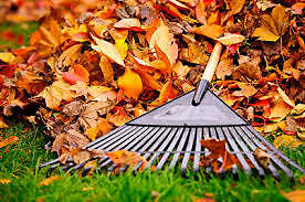Leaves / Yard - Leaf Clean-up / Gutters - Power Wash Sarnia Sarnia Area image 1