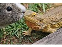 Pet sitting for reptiles, small mammals and birds!