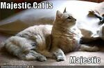 Majestic cat beauty & more
