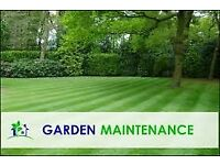 Professional & Affordable Gardening Maintenance Service / Window Cleaning Service with *Free Quote*