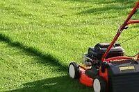 Service Entretien pelouse (gazon) et haies