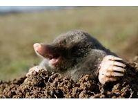 Mole Catching Service