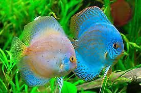 We Love to take any free unwanted fish,aquariums,tankaccessories