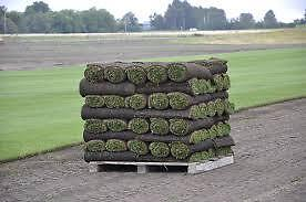 Dirty Larrys Fresh Morning cut Kentucky SOD...Free Delivery.