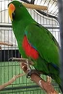 RSPCA lost pet notice - Bello AID 1050089