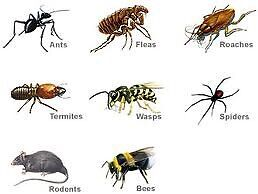 Discount Pest Control (Affordable, Guaranteed & Licensed)   Cambridge Kitchener Area image 3