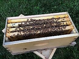 Wanted: Bees to fill a newly purchased Flow Hive, Swan Bay