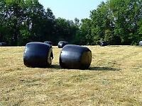 ROUND BALE SILAGE FOR SALE