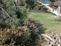 Trees & Brush & Junk Removal Services