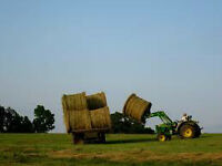 Will you need HAY in 2015-2016. Do you raise cattle or horses?
