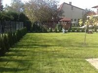 Hedge & grass & small Tree cutting service!!