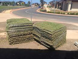 Gary's Dingo Hire Mini Digger Turf Preparation and Laying Kingston Logan Area Preview