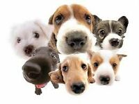 Fed up of paying huge kennel fees for your dogs and cats??