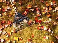 AVAILABLE TO RAKE LEAVES